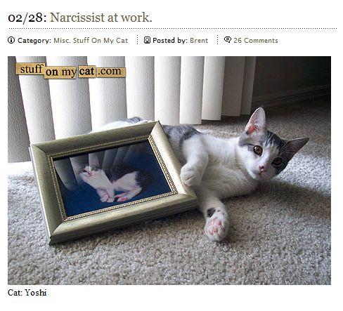stuffonmycat.jpg